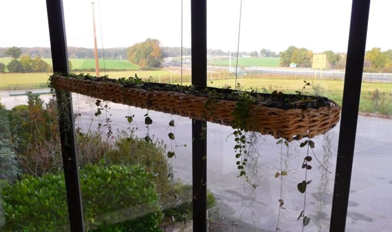 jardin en osier et en suspensions