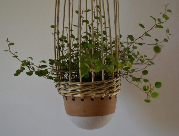 suspensions de plantes